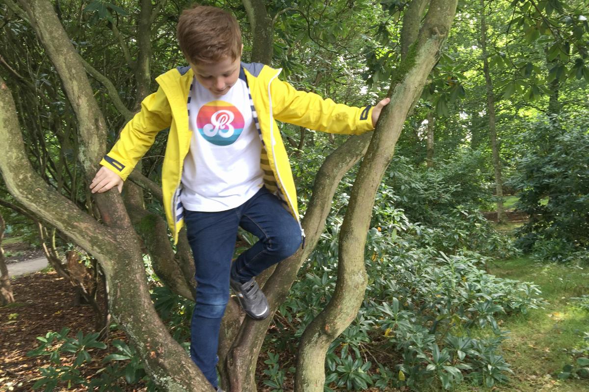Sam climbing a tree