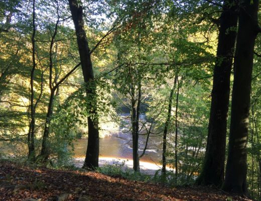 Strid Woods at Bolton Abbey