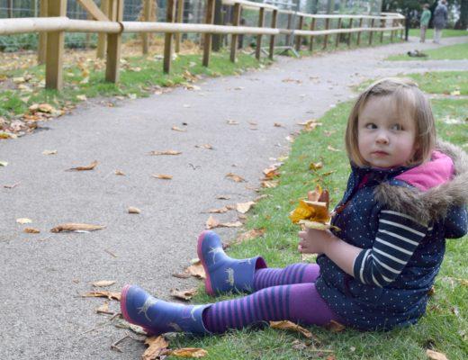 Flo sitting in leaves
