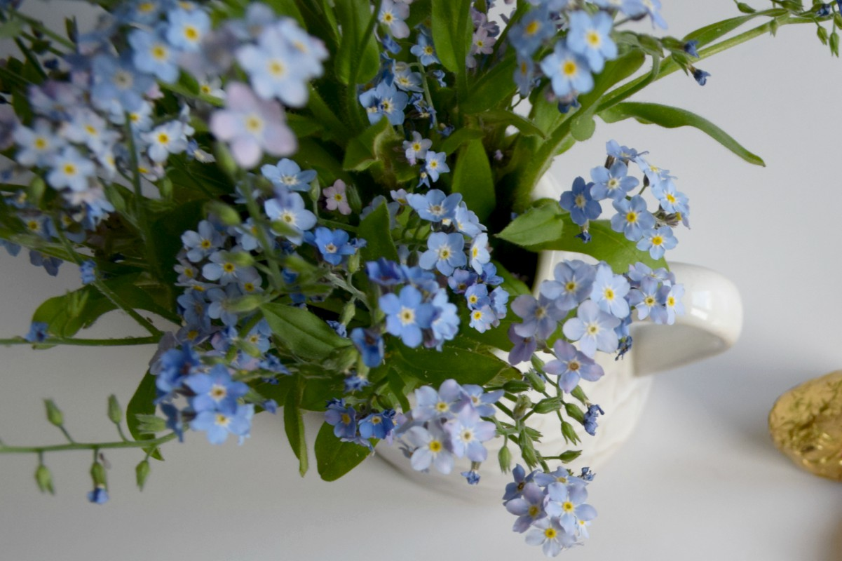 Forget me nots close up