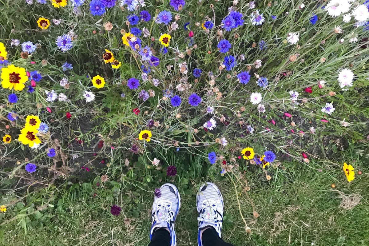 Flowers in August